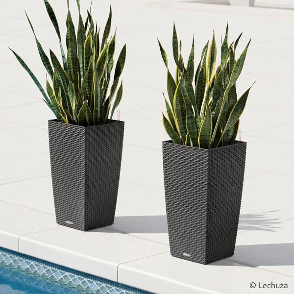 5 arredamenti floreali - Piante per bordo piscina ...