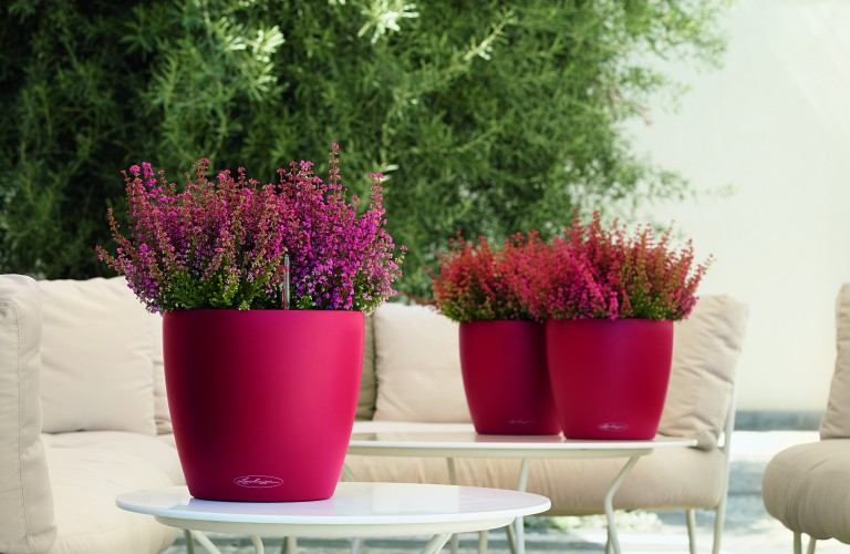 Arredamento floreale Spa - Lamezia Terme