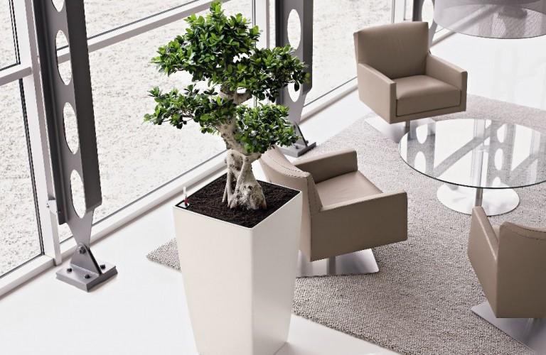 Arredamento floreale uffici - Ostuni