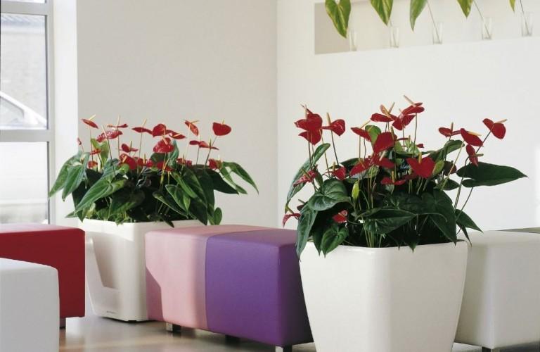 Arredamento floreale sala d'attesa agenzia di comunicazione - Milano