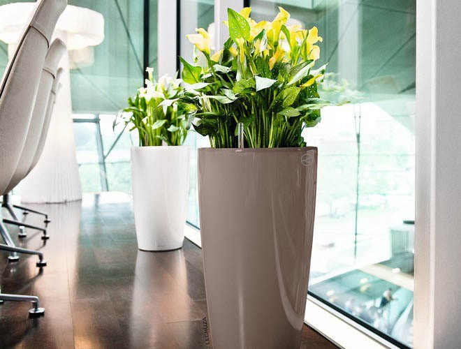 Arredamento floreale per spazi aziendali