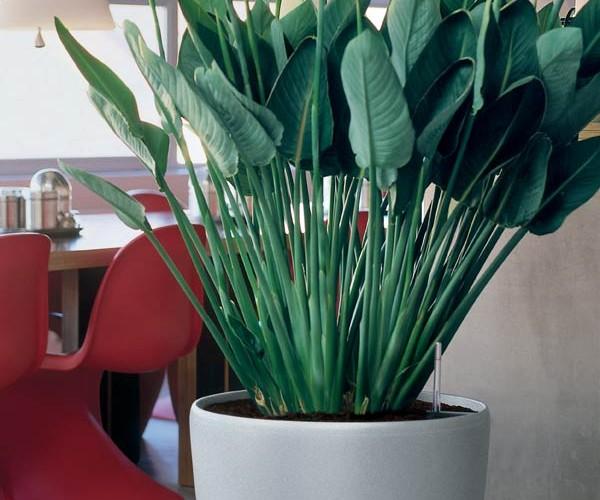 Arredamento floreale ristorante veg - Parma